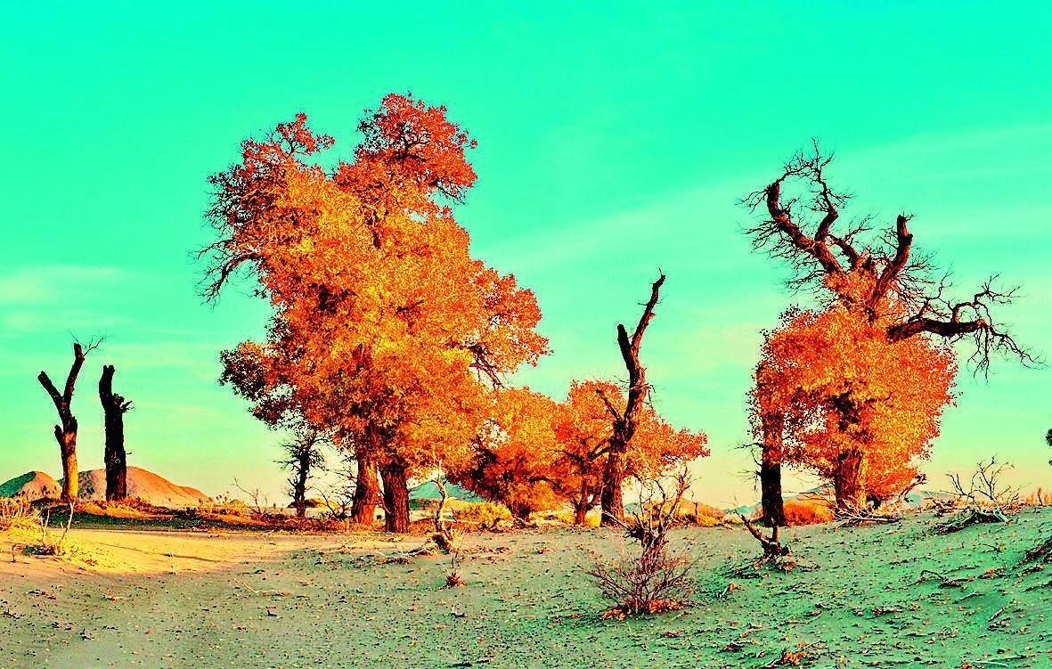 额济纳旗境内的胡杨林景色迷人.新华社发图片