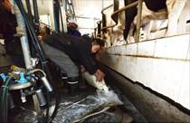 解读奶农之殇:为何受伤的总是我?
