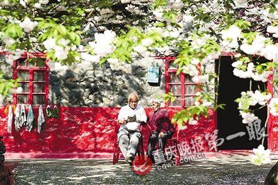 老两口常常坐在樱花树下读书看报